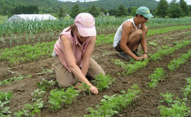 Planting Crops